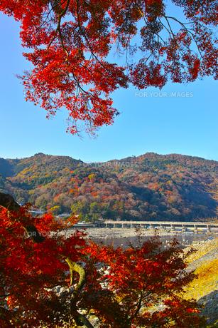 紅葉シーズンの渡月橋の写真素材 [FYI01185209]