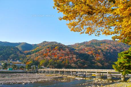 紅葉シーズンの渡月橋の写真素材 [FYI01185212]