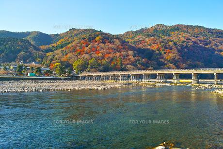 紅葉シーズンの渡月橋の写真素材 [FYI01185214]