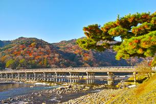 紅葉シーズンの渡月橋の写真素材 [FYI01185216]