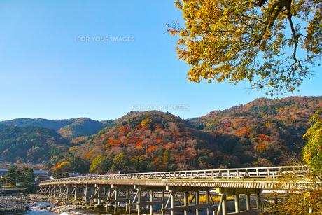 紅葉シーズンの渡月橋の写真素材 [FYI01185217]