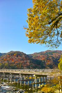 紅葉シーズンの渡月橋の写真素材 [FYI01185218]