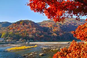 紅葉シーズンの嵐山の写真素材 [FYI01185219]