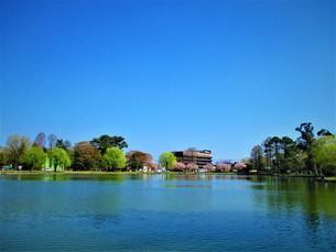 春の水色の世界の写真素材 [FYI01185269]