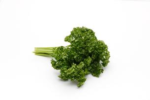 パセリ,香味野菜の写真素材 [FYI01185494]