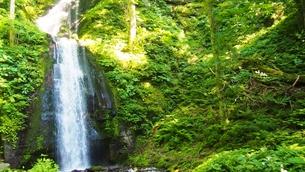 新緑の奥入瀬渓流の写真素材 [FYI01185514]