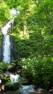 新緑の奥入瀬渓流の写真素材 [FYI01185515]