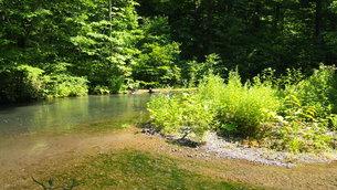 新緑の奥入瀬渓流の写真素材 [FYI01186143]