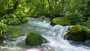 新緑の奥入瀬渓流の写真素材 [FYI01186144]