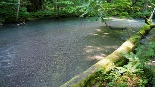 新緑の奥入瀬渓流の写真素材 [FYI01186145]