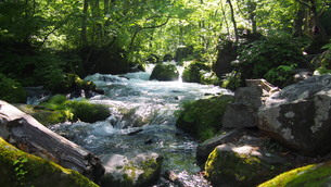 新緑の奥入瀬渓流の写真素材 [FYI01186146]