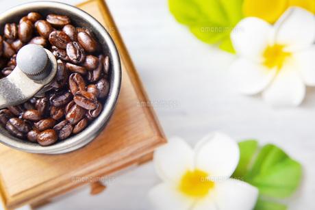 珈琲、コーヒー豆、プルメリアの写真素材 [FYI01186224]