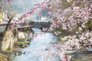 高尾山口駅付近の桜の写真素材 [FYI01186533]