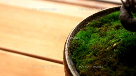 盆栽の鉢に生えた苔の接写の写真素材 [FYI01186696]