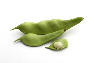 インゲン,モロッコインゲンの写真素材 [FYI01186701]