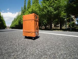 神宮外苑の銀杏並木の写真素材 [FYI01187033]