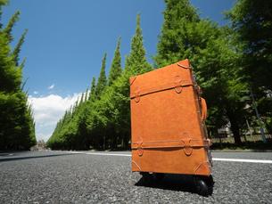 神宮外苑の銀杏並木の写真素材 [FYI01187035]