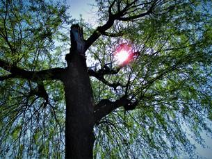 森の光の写真素材 [FYI01187075]