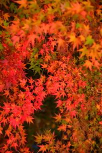 秋色の写真素材 [FYI01187294]