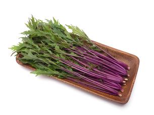 赤茎水菜の写真素材 [FYI01187578]