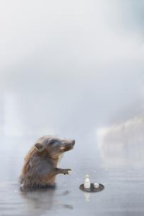 温泉に入る猪 (年賀用合成)の写真素材 [FYI01187714]