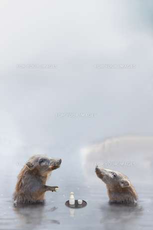 温泉に入る猪 (年賀用合成)の写真素材 [FYI01187715]