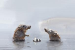温泉に入る猪 (年賀用合成)の写真素材 [FYI01187717]