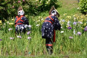 花しょうぶ園の花摘み/早乙女姿の写真素材 [FYI01187773]