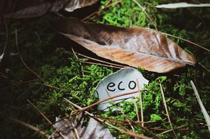 エコロジーメッセージの写真素材 [FYI01188236]
