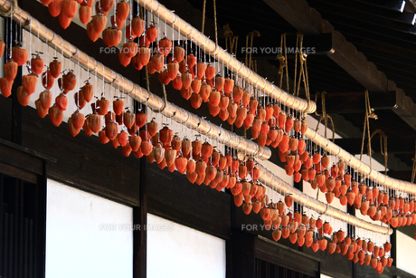 古民家の軒先の干し柿の写真素材 [FYI01188324]