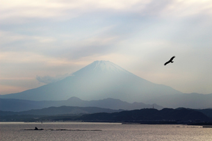 富士山を見晴らす海景の中を飛ぶトンビの写真素材 [FYI01188429]