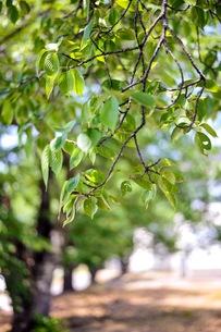新緑の写真素材 [FYI01188489]