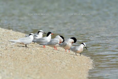 宮古島/夏の波打ち際の写真素材 [FYI01188725]