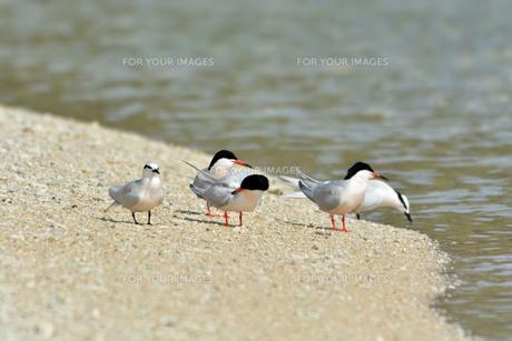 宮古島/夏の波打ち際の写真素材 [FYI01188730]