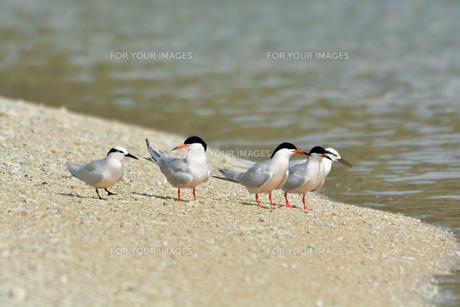 宮古島/夏の波打ち際の写真素材 [FYI01188731]