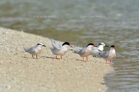 宮古島/夏の波打ち際の写真素材 [FYI01188732]