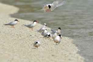 宮古島/夏の波打ち際の写真素材 [FYI01188733]