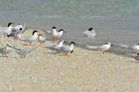 宮古島/夏の波打ち際の写真素材 [FYI01188991]