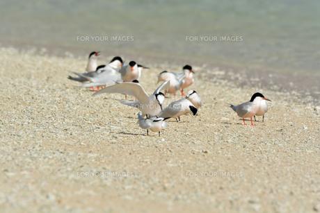 宮古島/夏の波打ち際の写真素材 [FYI01188992]
