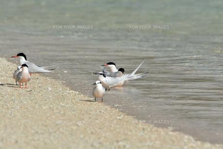 宮古島/夏の波打ち際の写真素材 [FYI01188994]