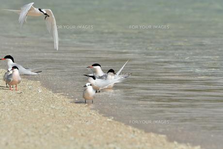宮古島/夏の波打ち際の写真素材 [FYI01188995]