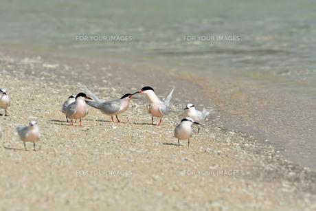 宮古島/夏の波打ち際の写真素材 [FYI01188997]