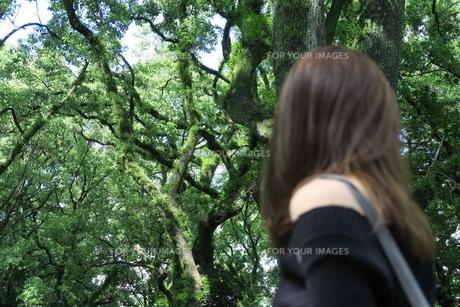森林の写真素材 [FYI01189143]