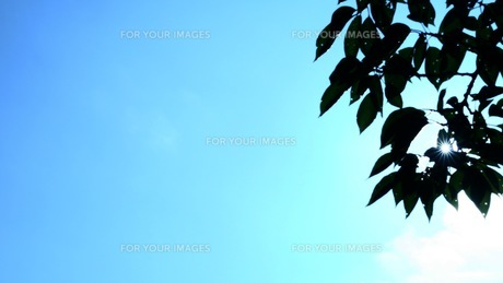 ClearSkyの写真素材 [FYI01189150]