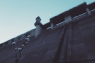 ダムを見上げる花の写真素材 [FYI01189154]