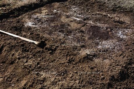 白ネギの苗植えつけ / 家庭菜園の写真素材 [FYI01189422]