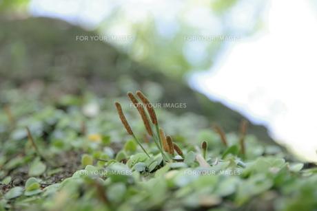 自然 木 の写真素材 [FYI01189922]
