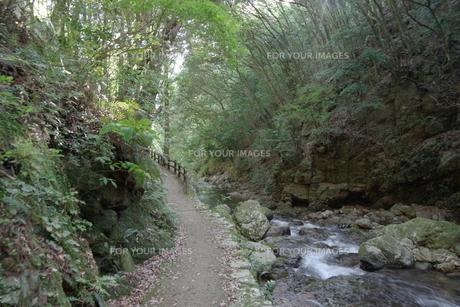 森の写真素材 [FYI01189927]