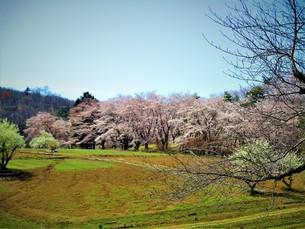 田舎の桜の写真素材 [FYI01189939]