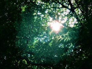 春の森の自然の写真素材 [FYI01189959]